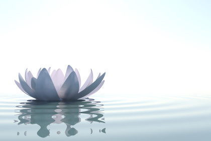zen lotus flower floating on water